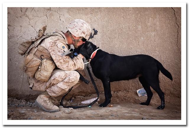 Marines_best_friend